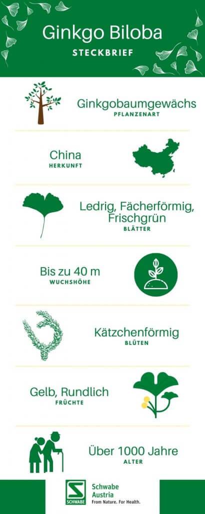 Ginkgo Biloba Baum Infographic