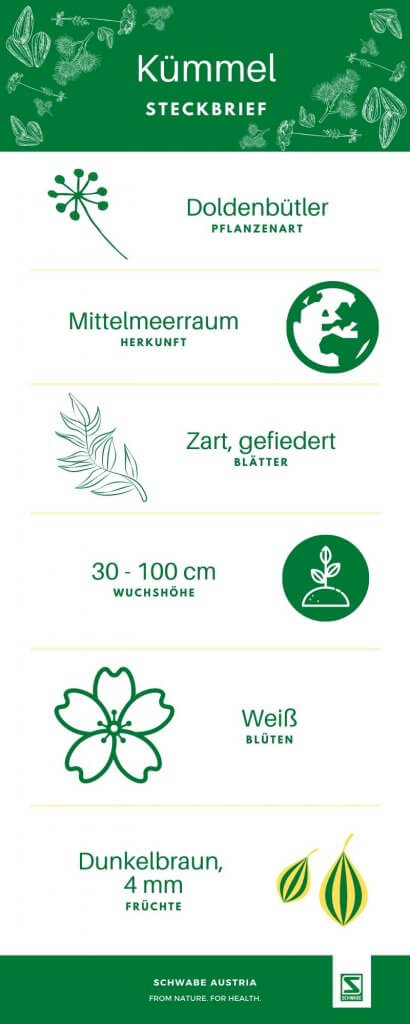 Kümmel Sodbrennen Phytotherapie