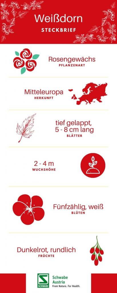 Weißdorn Herz Kreislaufprobleme