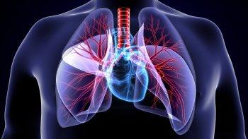 Lunge Aufbau Mensch